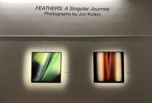 Feathers: A Singular Journey